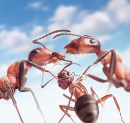 ants under peaceful sky, focus on whelp