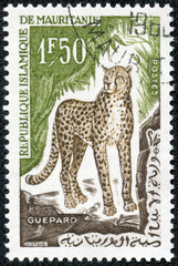 stamp printed in Mauritania shows a cheetah
