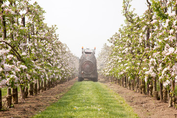 treating blossoming apple treas by spraying