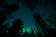 Northern lights above trees in Norway