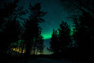 Northern lights above trees in Sweden