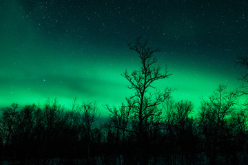 Northern lights above forest in Sweden