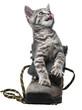 cute little kitten playing in a shoe