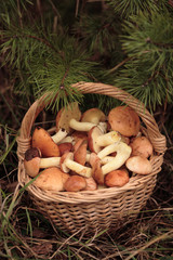 Basket of Sticky Buns or  Jack mushrooms