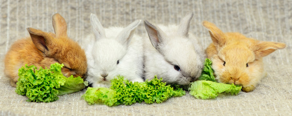 four newborn rabbits