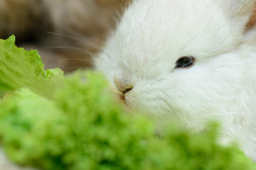 newborn white rabbit