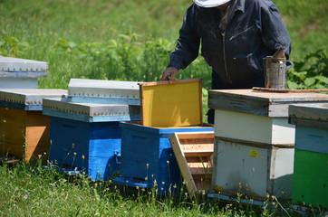 Beekeeper with new honey comb