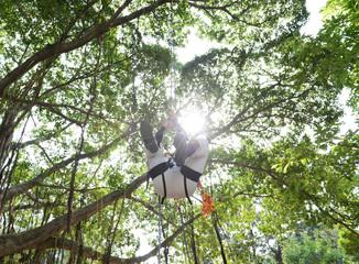 climbing high tree