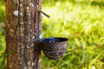 Sap from tree