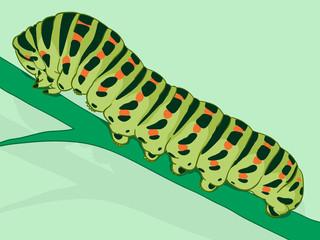 Green caterpillar on a plant stalk