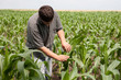 young farmer in a corn field