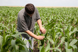 young farmer in a corn field