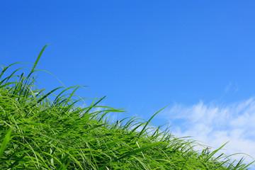 草原と白い雲