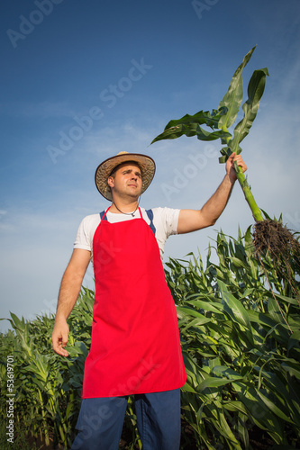 Farmer in field