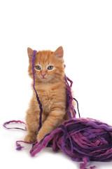 Kätzchen mit Wollknäuel - kitten with wool