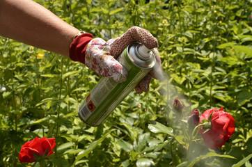 Pflanzenschutz gegen Blattläuse