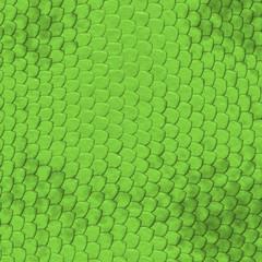 Iguana skin pattern