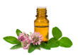 essential oil and blooming clover