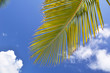 Palm branch against blue sky