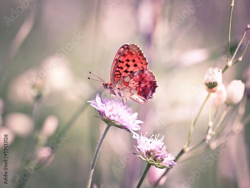 Fotobehang Vlinder Butterfly on the wildflower