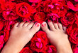 Female legs among of rose petals