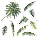 vector illustration of a tree and palm tree branches