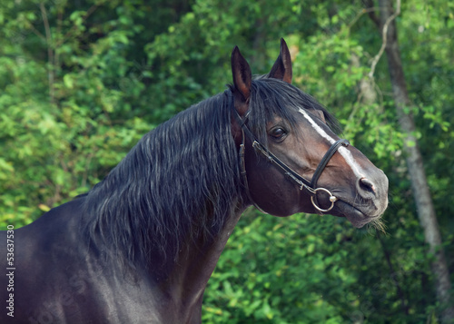 beautiful breed  stallion at forest background