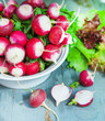 Bunch of fresh radishes