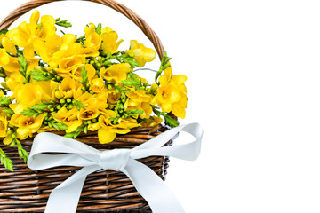 Yellow freesia flowers in the wicker
