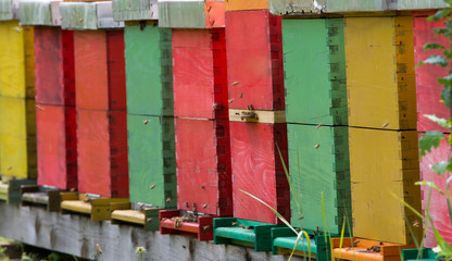 colorful beehives
