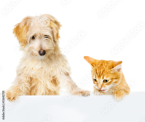 Cat and Dog above white banner. looking down. isolated on white