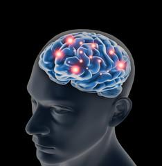 Male anatomy of human brain