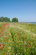 Frühlingswiese am Hagensche Wiek auf der Insel Rügen