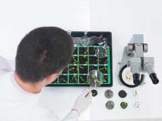 Laboratory technician checking seedlings