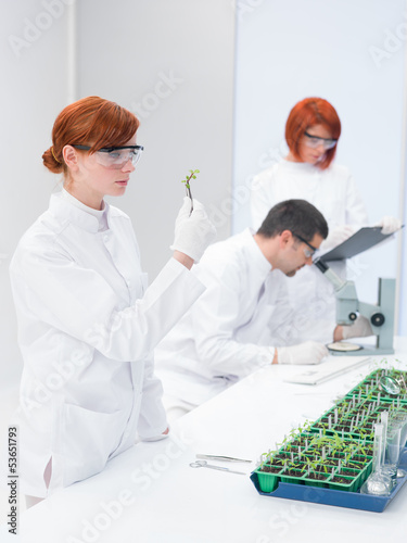 Scientists in a genetic engineering laboratory