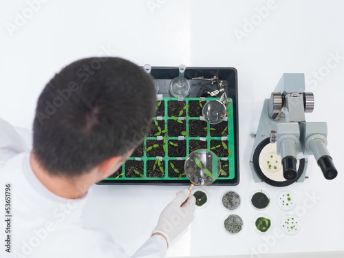 Laboratory technician checking seedlings