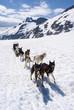 Alaska - Dog Sledding - Travel Destination