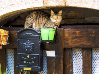Gestreifte Katze auf einem Briefkasten