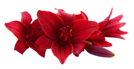 Red lily flowers, isolated on white background.