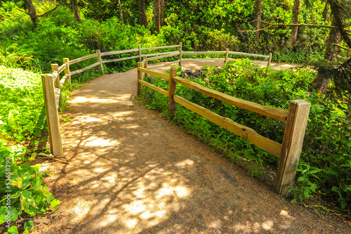 Path through forest with wooden fence