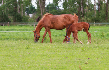 Baby horse and mare equine
