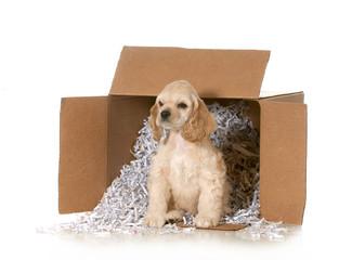 shipping animals