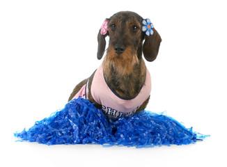 dog dressed like cheerleader