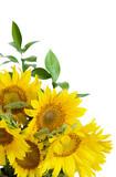 Fototapety Bouquet of sunflowers