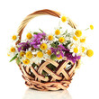 Beautiful wild flowers in basket, isolated on white