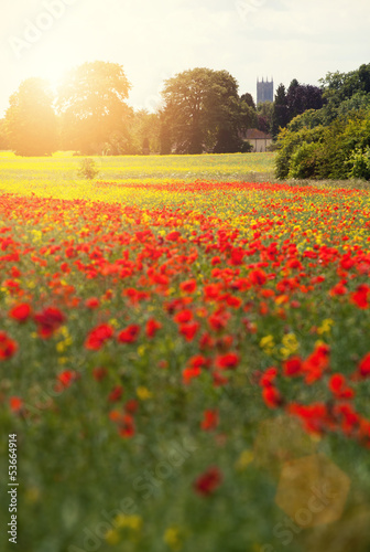 lincoln poppy field