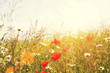 sun flare meadow