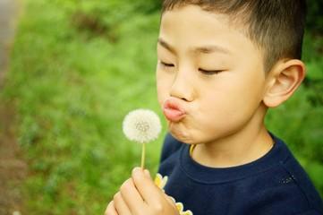 タンポポと少年 A Boy brows dandelion's puffbal