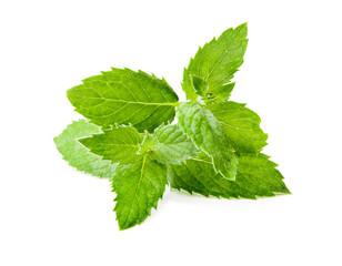 Leaf spearmint on white background