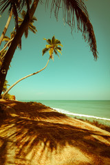Beautiful sunny day at tropical beach with palm trees